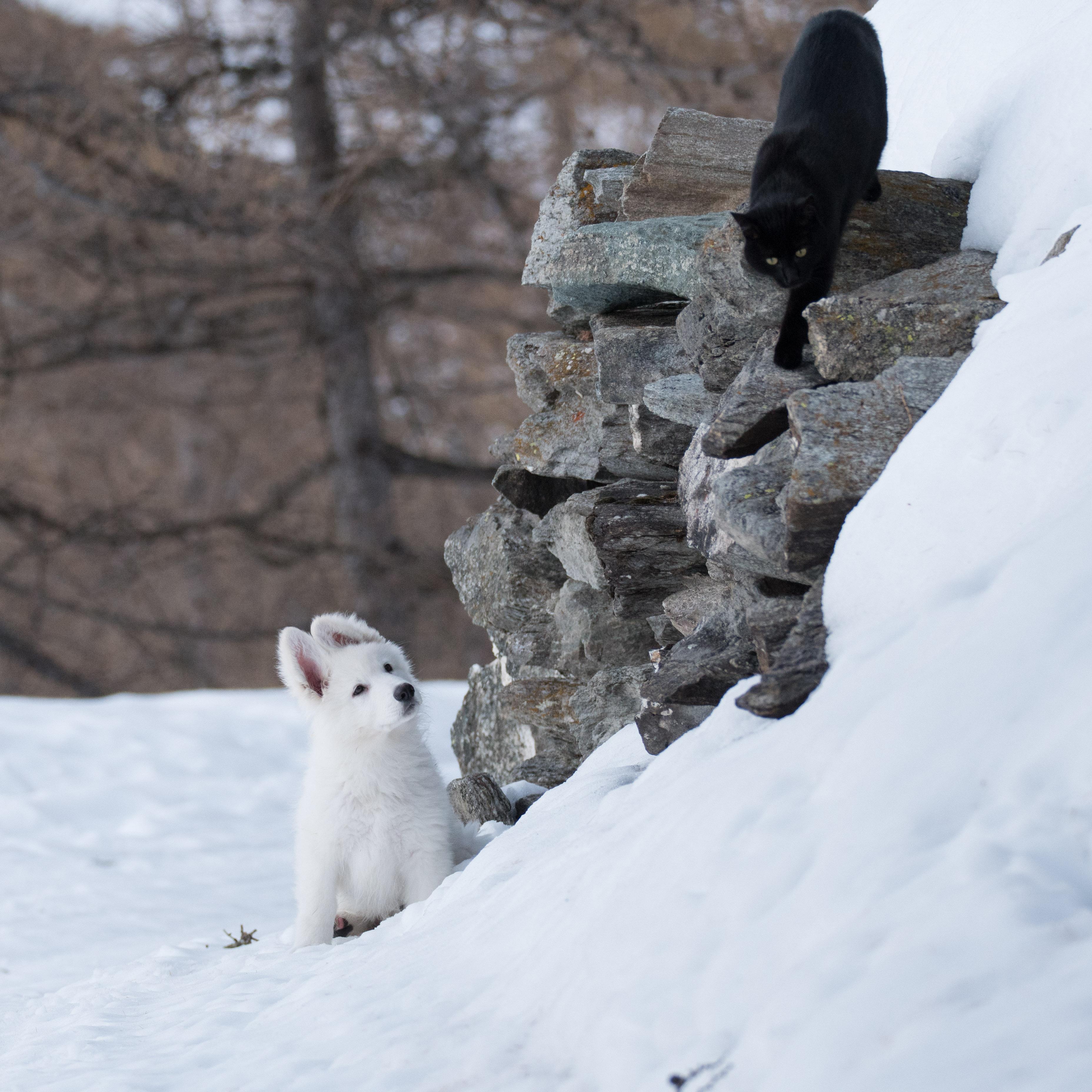 questo gatto cosa fa?
