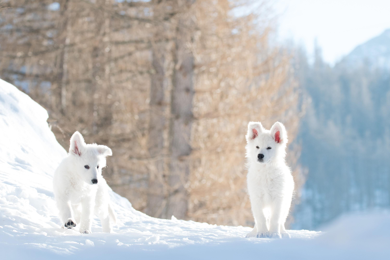 corse nella neve
