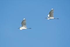 uccelli_massimiliano_pons_05